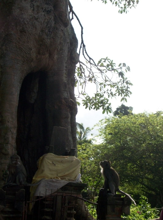 """The monkey said, """"Why there is a big hole in this trunk? Is she open her mouth? Let me give her a sweet banana.."""""""