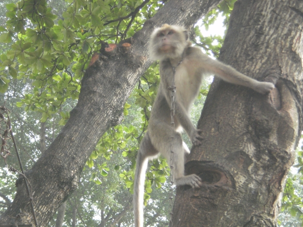 ada monkey juga ternyata...hehehe
