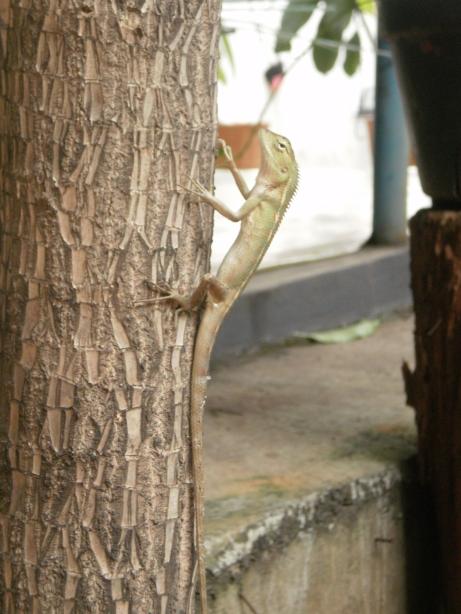 the iguana climb higher and higher